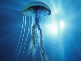 ElectricJellyfish