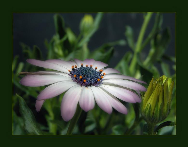 Смс картинки цветы 3