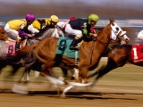Thoroughbred Horse Racing, Turfway Park, Kentucky