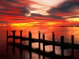 Seagulls at Sunset, Fort Myers, Florida
